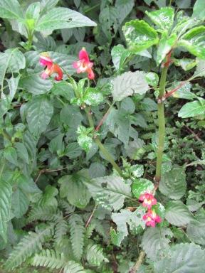 Kili flower