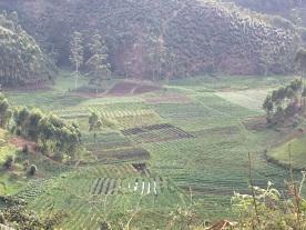 Looking down in the valley in Uganda